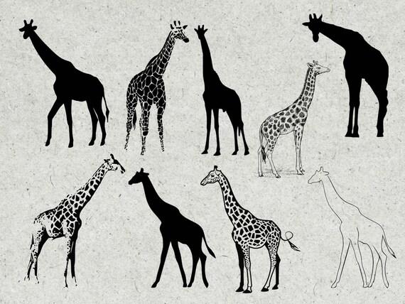 Giraffe Svg Bundle Giraffe Svg Giraffe Dxf Giraffe Cut Etsy