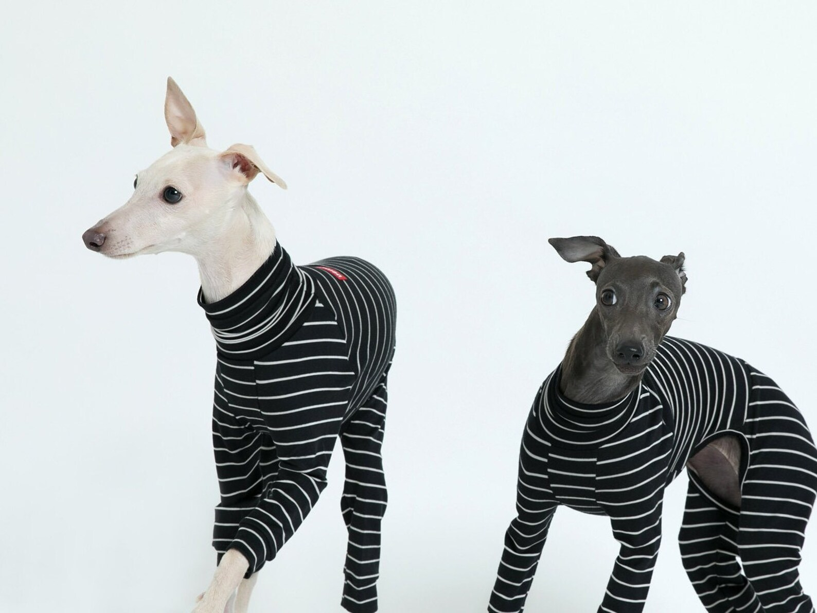 vemvem® ballet: slim heat - stripe - black for italian greyhound