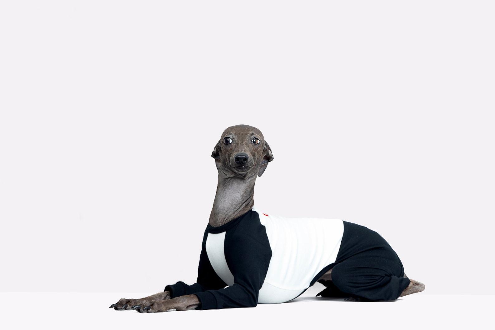 vemvem® ballet: slim heat neckless - raglan black for italian greyhound