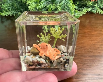 Miniature Octopus Aquarium, Marine Aquarium, Cube