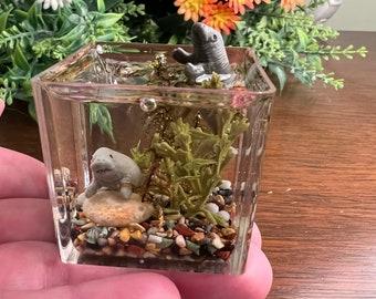 Miniature Manatee Aquarium