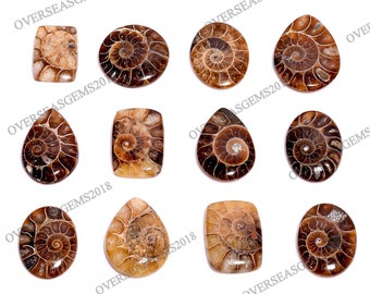 Natural Ammonite Fossil 18x25mm Oval Shape Fossil Jewelry Making Loose Stone Ammonite Fossil Gemstone Ammonite Fossil Cabochon