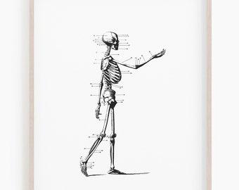 photo about Printable Skeletons titled Skeleton print Etsy