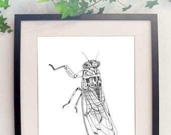 Poster cicada print cicada Provence