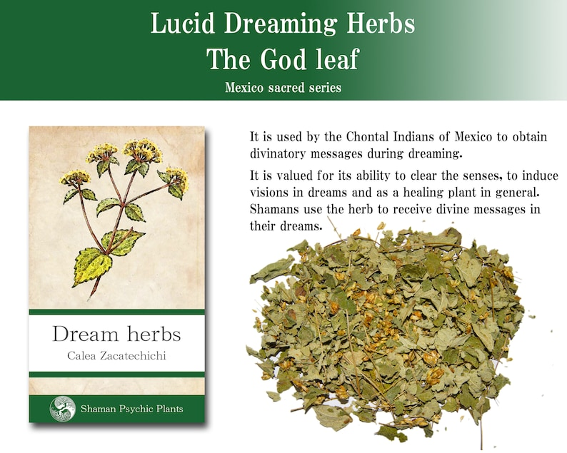 Calea ternifolia Mexican Shaman Lucid Dreams herb Magic Religious Ritual  Witches Flying