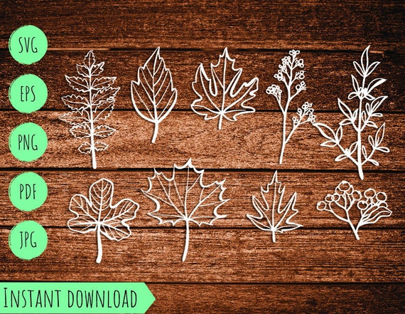 Set Fall Autumn Leaves Vector Svg Eps Pdf Png Jpeg File Maple Leaf Template Cut Cutting Thanksgiving Halloween Clipart Cricut Silhouette