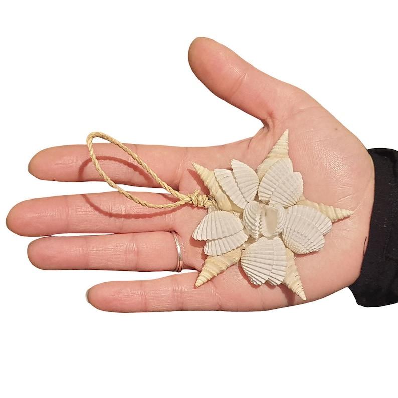 Design 3 Seashell Decor; Decorative Shells