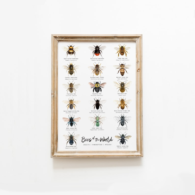 Bees of the world classroom wall art  Homeschool poster  image 0