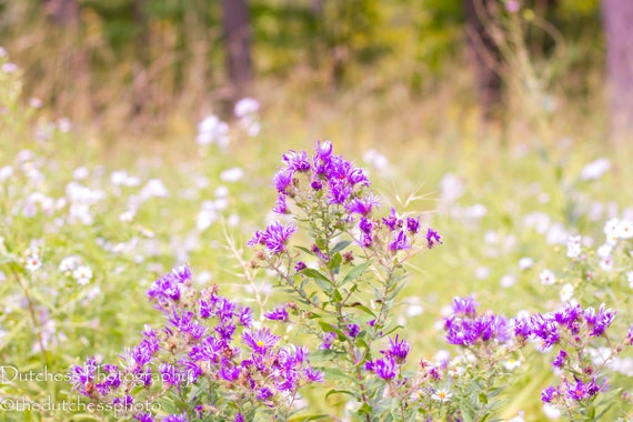 Purple Flowers White Flowers Trees Garden Woods Forest North Etsy