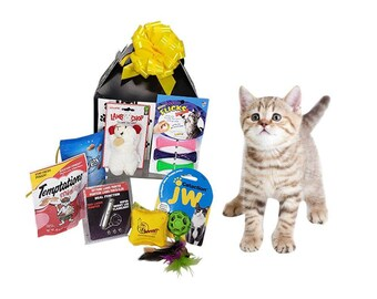 Isabel Best Gifts for Cats Refrigerator Magnet New Kitten Gift New Cat Gift
