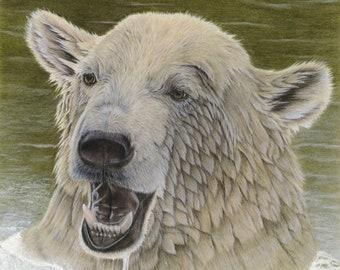 "Polar Bear portrait, 8.5""x11"" art print of my original coloured pencil drawing"
