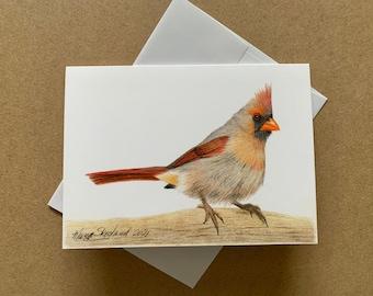 "Female Cardinal original coloured pencil 5""x7"" art card, blank inside, bird art, wall decor, greeting card"