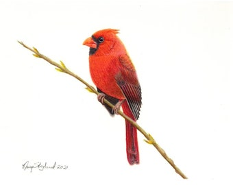 """Original coloured pencil bird art of a Cardinal, 9""""x12"""" wall art, gift of art"""