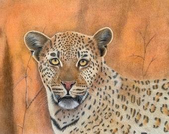 "African Leopard portrait, 8.5""x11"" art print of my original coloured pencil wildlife drawing, wall decor"