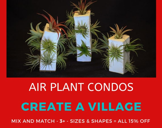Air Plant Condo - A Village