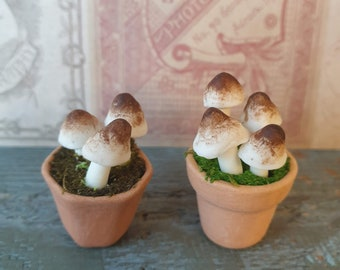 Dolls & Bears Dolls House Miniature Apothecary Witches Circle Fungi