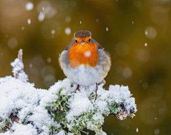 Snowy Robin blank greeting card / christmas card / birthday card / winter card