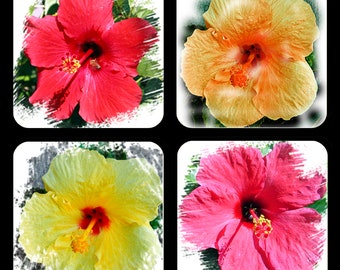 Colorful Hibiscus Flower Coasters Set of 4