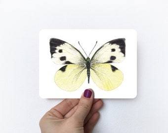 Great Cabbage White   Postcard A6 with rounded corners