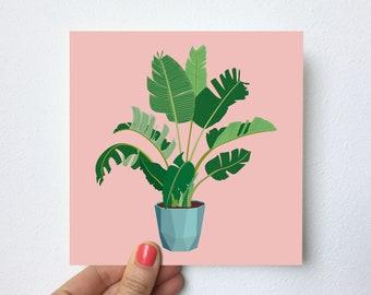 SALE!!! Banana plant   Postcard 148x148mm