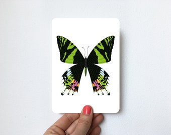 Butterfly Urania   Postcard A6 with rounded corners