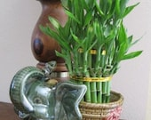 Jumbo Size Elephant Ceramic Vase with 3 Tier 4 quot 6 quot 8 quot Quality Lucky Bamboo Plant