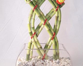 Live 3 Style Party Set of 4 Bamboo Plant Arrangement w// Ceramic Vase Decor Gift