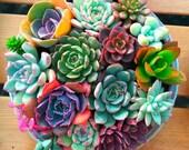 100pcs bag mix Cactus Succulent seeds flower Living Stone bonsai