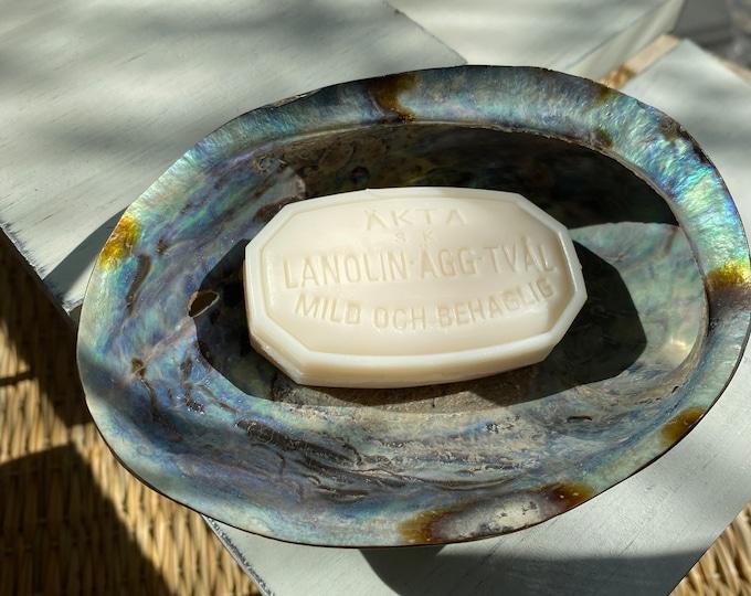 Samal Abalone Soap Dish