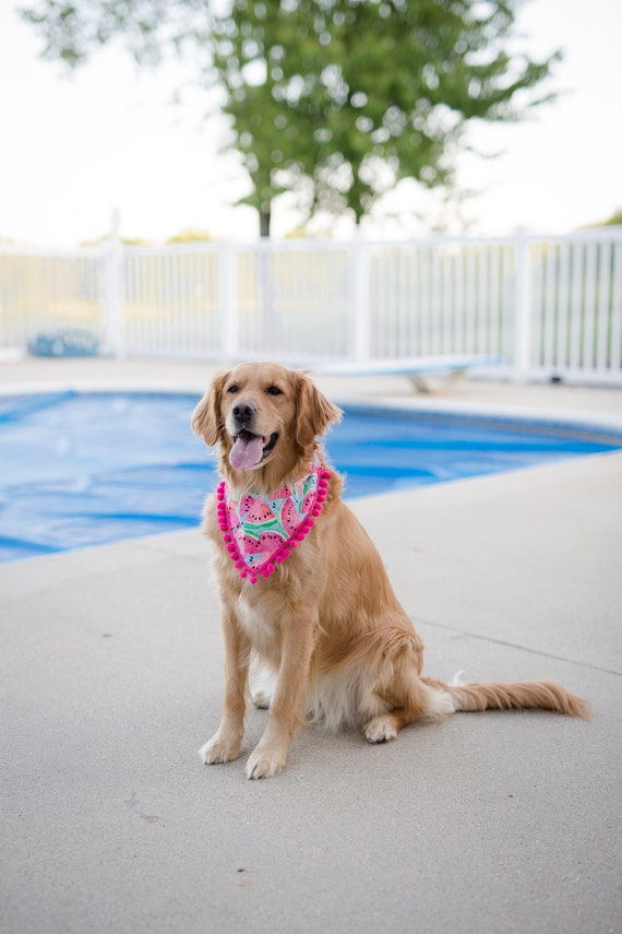 dog accessories Summer Dog Bandana dog mom gift Watermelon summer dog scarf, dog scarf watermelon scarf