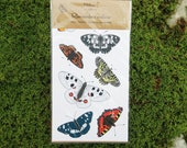 Beautiful Butterfly Stickers