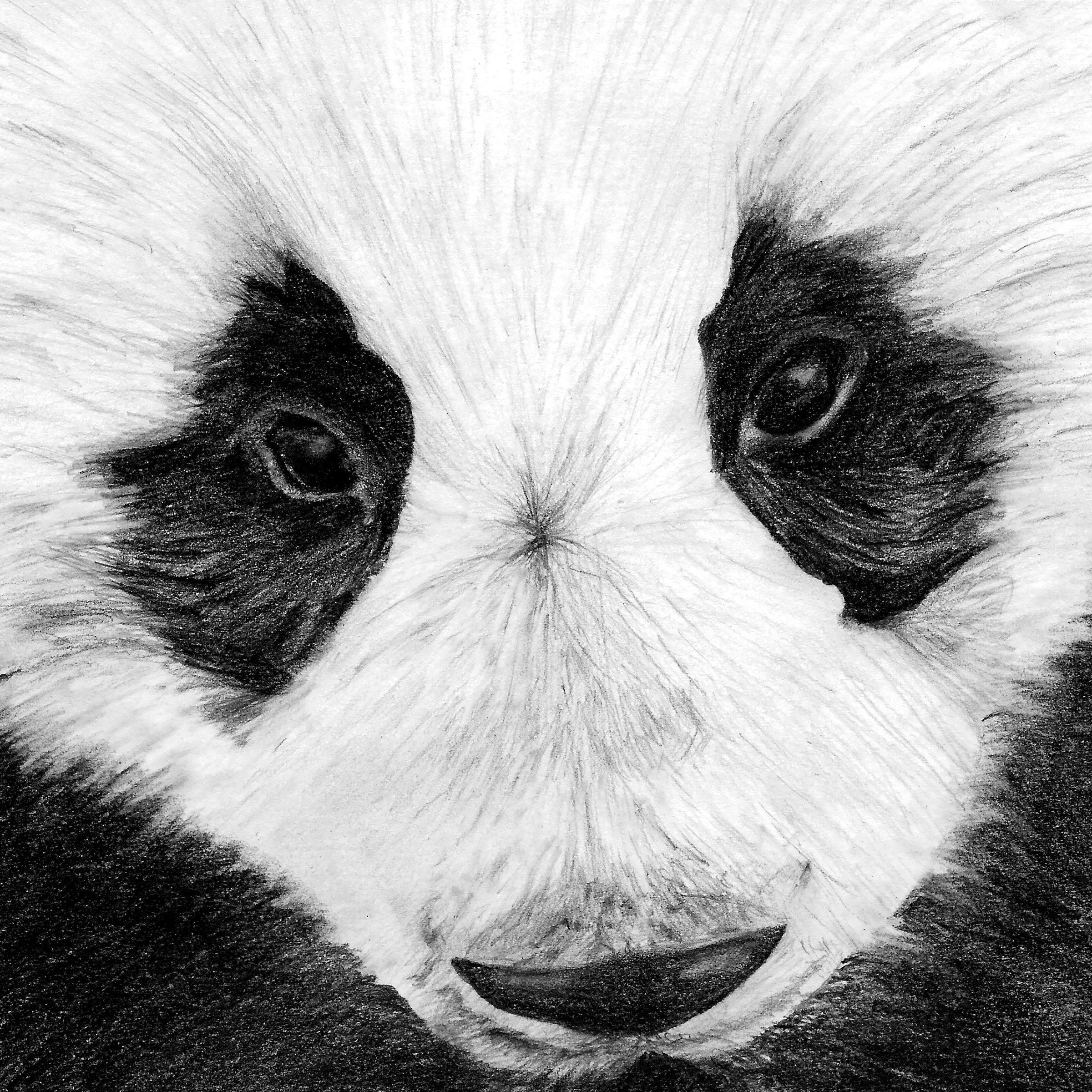 Cropped panda pencil drawing print panda illustration animal illustration animal drawing digital print