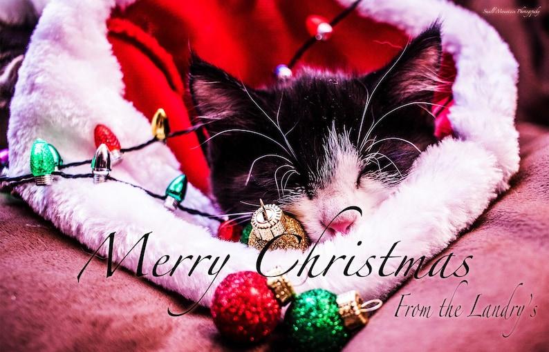 Kitten Christmas Cards.Christmas Card Kittens