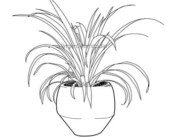 Hand drawn realistic potted plant spider plant SVG download