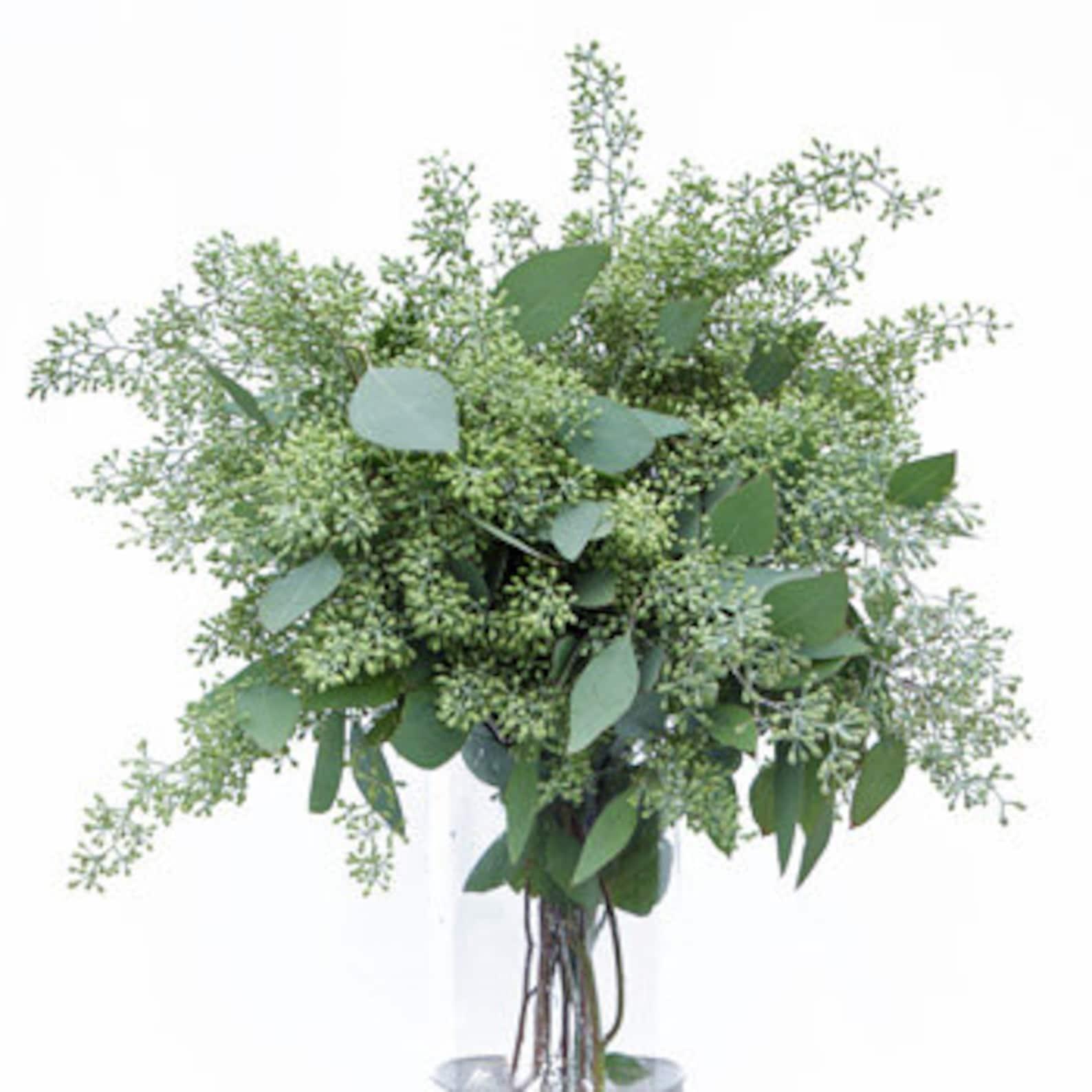 Зелень астер для букетов эвкалипт, гортензией синей свадебные