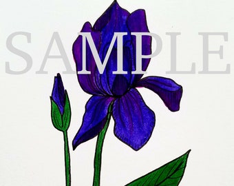27d873be2 Watercolor Iris Tattoo Design