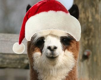 Pack of 5 - Alpaca Christmas cards