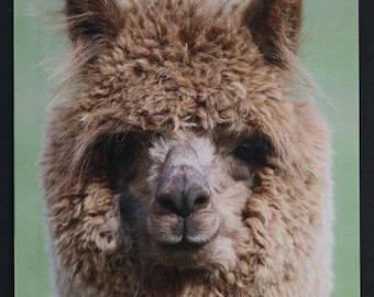 Alpaca greeting card - JoJo the alpaca