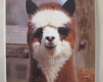 Alpaca greeting card - Gordon the alpaca!