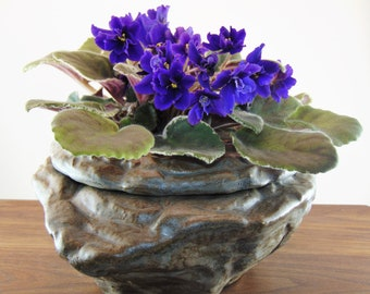 Large African Violet Plantyer