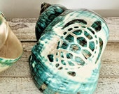 Large Turbo Shell (3.5 quot - 4.5 quot ) Turtle Carved Green Turbo Shell - Nautical Decor - Craft Shell, Seashell Gift - Hermit Crab Shell