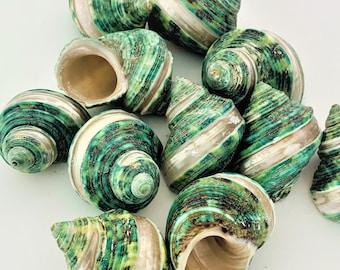 Simply Seashells Decor