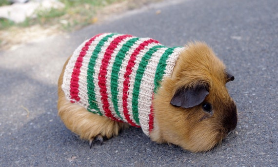 guinea pigs yellow knit sweater Clothes for dwarf bunny Small pets accessories