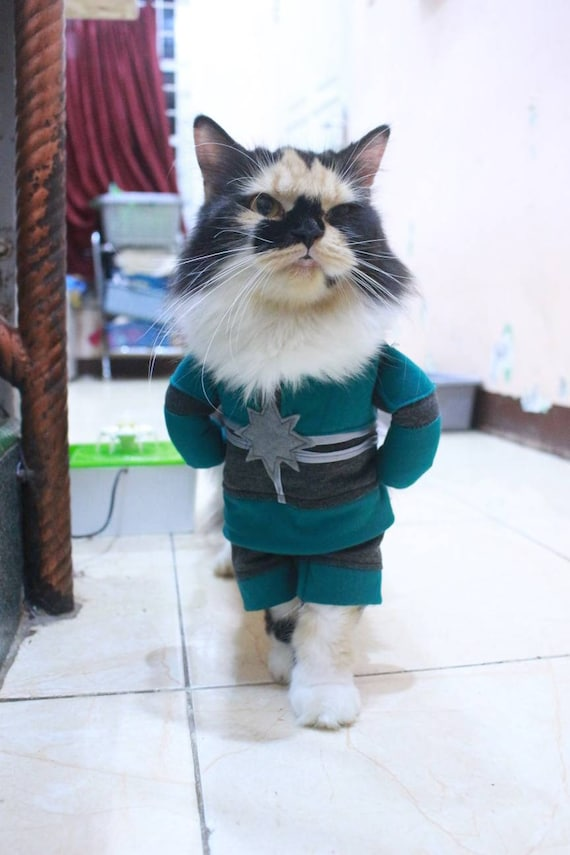 Costume Captain Marvel Original For Cat Or Small Dog Persian Etsy This costume review, by curious cat, shows the cosplaysky.com version of this. costume captain marvel original for cat or small dog persian cat sphynx cat outfit cat clothing for cute pet