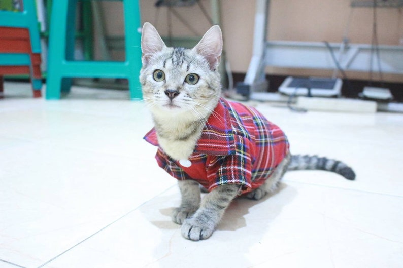 persian outfit sphynx outfit. Red T-shirt with square motive for sphynx cat or persian cat cat clothing with cool motive