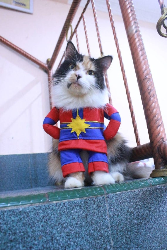 Costume Captain Marvel Final For Cat Or Small Dog Persian Etsy Marvel & captain marvel worn by panda and lita. costume captain marvel final for cat or small dog persian cat sphynx cat outfit cat clothing for cute pet