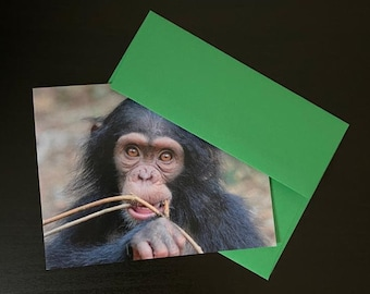 6 PASA Greeting Holiday Cards - Support the Pan African Sanctuary Alliance!