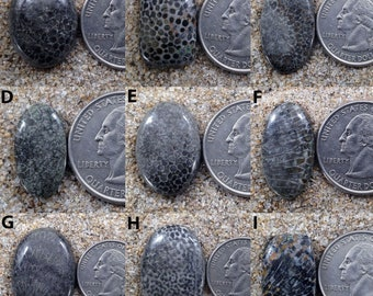 Black Fossil Cabochon Mix Shapes & Sizes coral Cabochons Natural Black Fossil coral Gemstone High Grade Black Fossil coral Loose stone