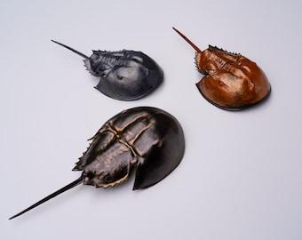New England Horseshoe Crab - made to order
