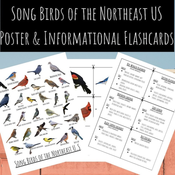 Songbirds of the Northeast U.S. Poster and Informational